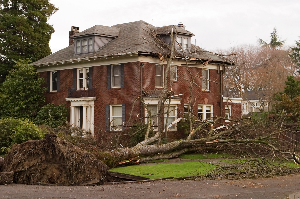 A Homeowner's Guide to Preventing Tree-Related Storm Damage