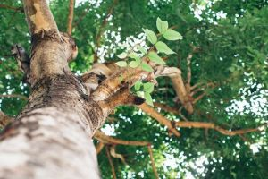 3 Ways to Avoid Damaging Your Trees When Planting Flowers in Your Yard