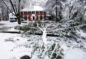 winter-storm-tree-damage