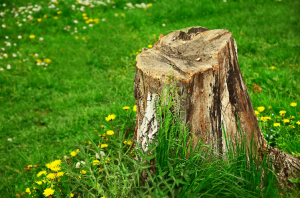 stump-removal-tinley-park