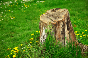 tree-stump-front-yard