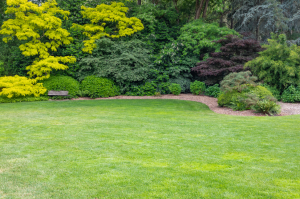 lawn-trees-landscaping