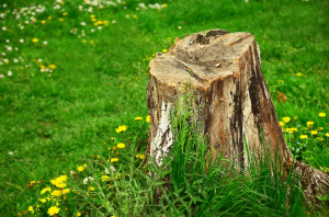 tree-stump-yard-removal