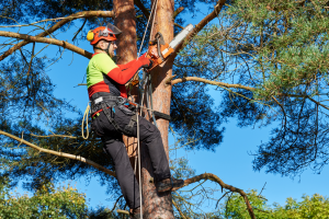 tree-pruning-chainsaw